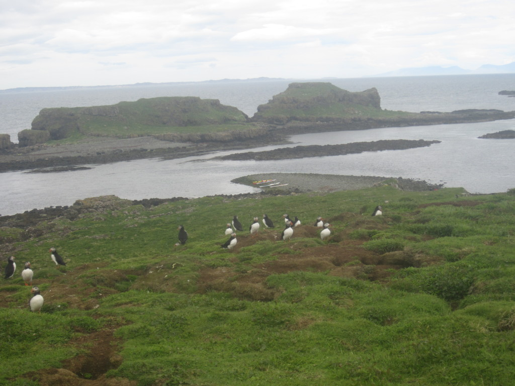 Puffins and Kayaks